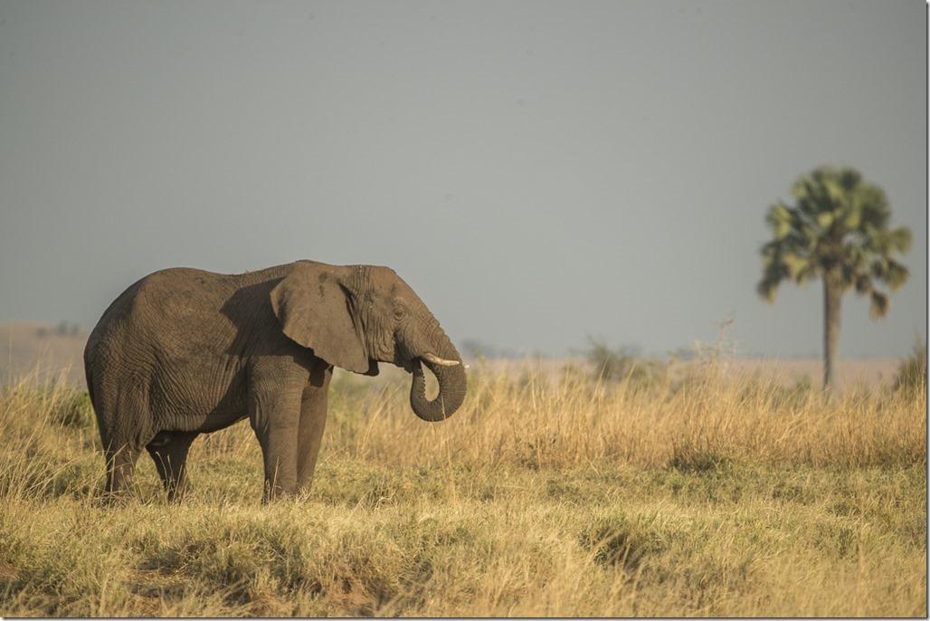 uganda-03-18