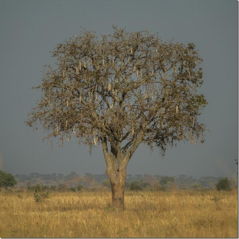 uganda-03-31
