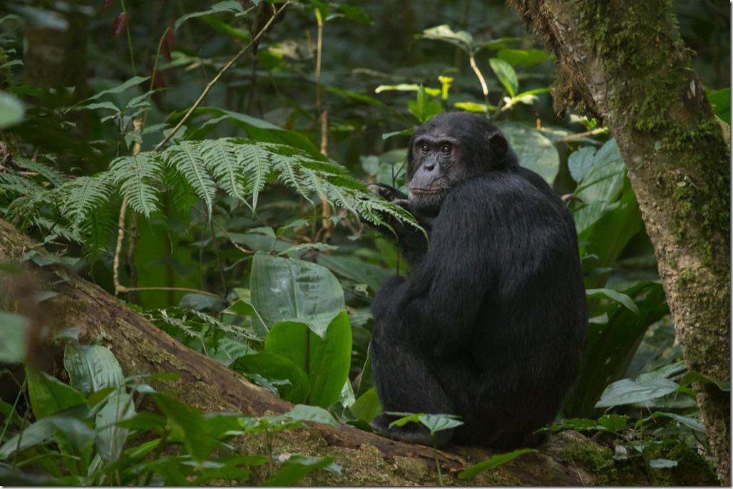 uganda-05-30